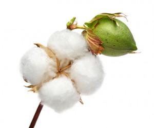 Baumwolle ist nicht gleich Baumwolle